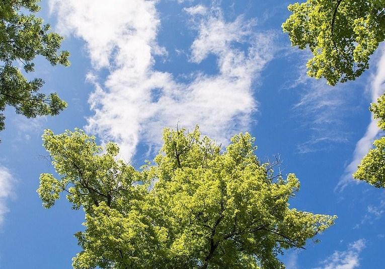 Nebeské stromy