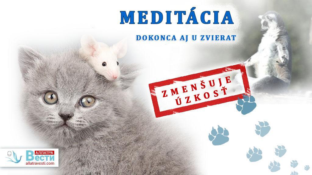 Meditácia zmenšuje úzkosť dokonca aj u zvierat!
