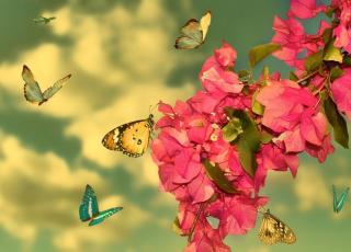 Dotek motýlů