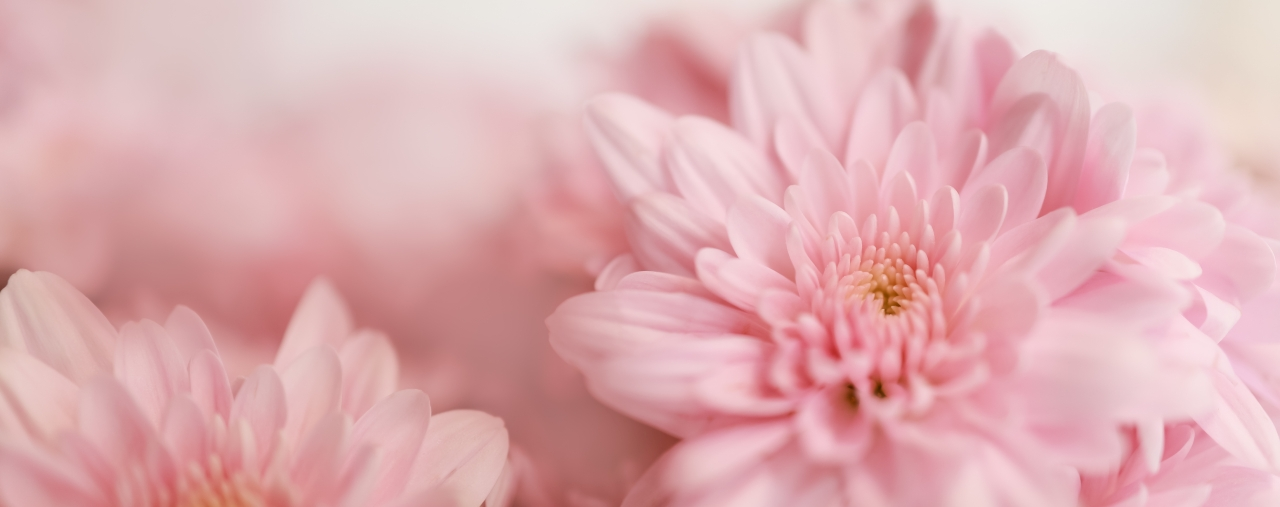 closeup-pink-flower-with-white-background