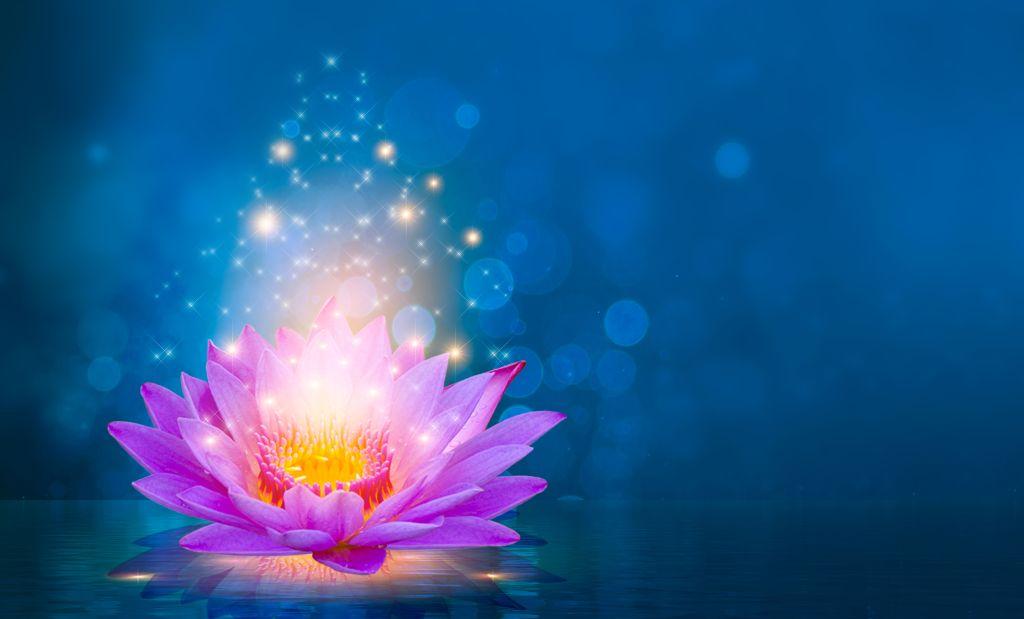 lotus-pink-light-purple-floating-light-sparkle-purple-background